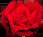 http://yoursmileys.ru/ismile/flowers/flower019.png